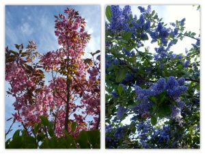 Spring in Ireland 1