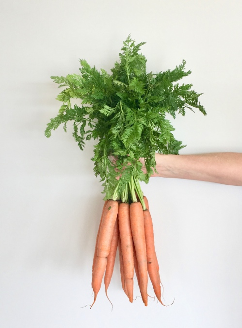 Spring carrots with their greens still on