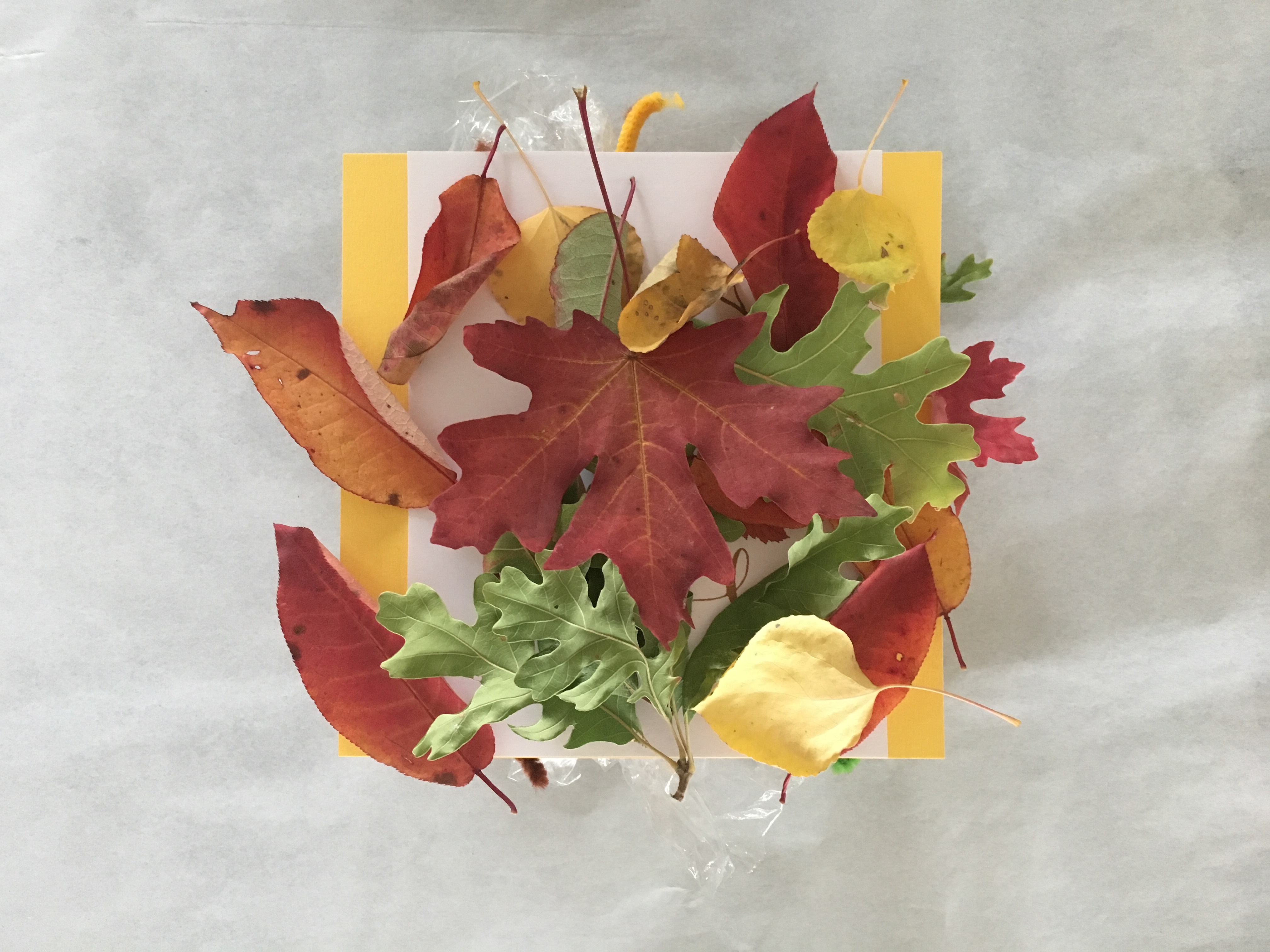 red, yellow, green autumn leaves